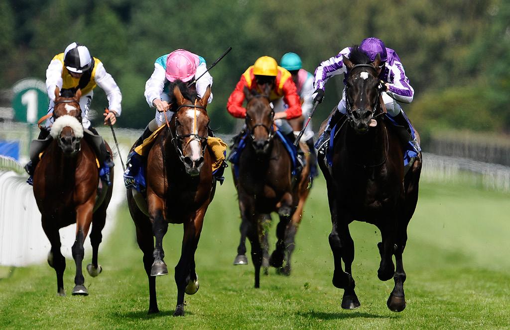 Jobba med tävlingshästar inom trav och galopp